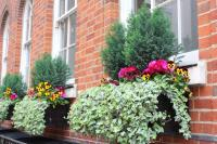 Window Box Ideas & Best Flowers For Shade Window Boxes ...