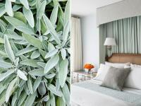 15 Ways to Decorate With Soft Sage Green | HGTV