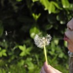 child-blowing-dandilion