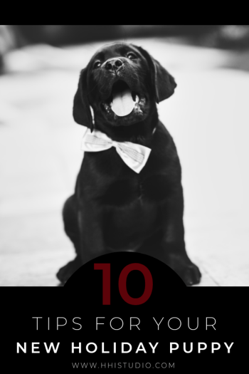 black and white image of puppy with a bow tie yawning. 10 tips for your new holiday puppy