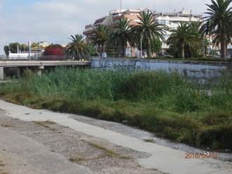 Vegetación del río