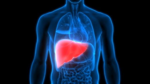 Fatty liver disease: What it is and what to do about it - Harvard Health Blog - Harvard Health Publishing