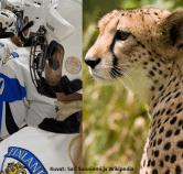 Tanja M kuva urheilija ja gepardi