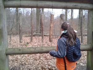 Wald-Xylophon (leider schon etwas mitgenommen...)