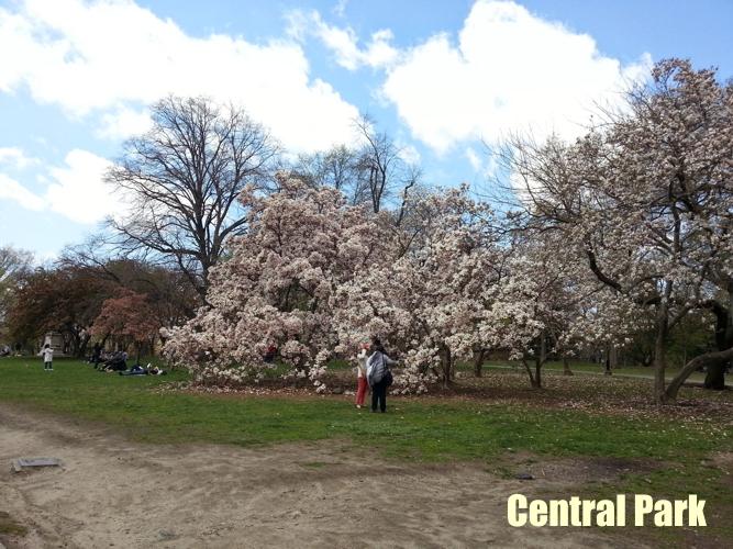 NY_Central_Park_4