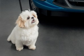 Pets ganham acessórios de transporte da Chevrolet