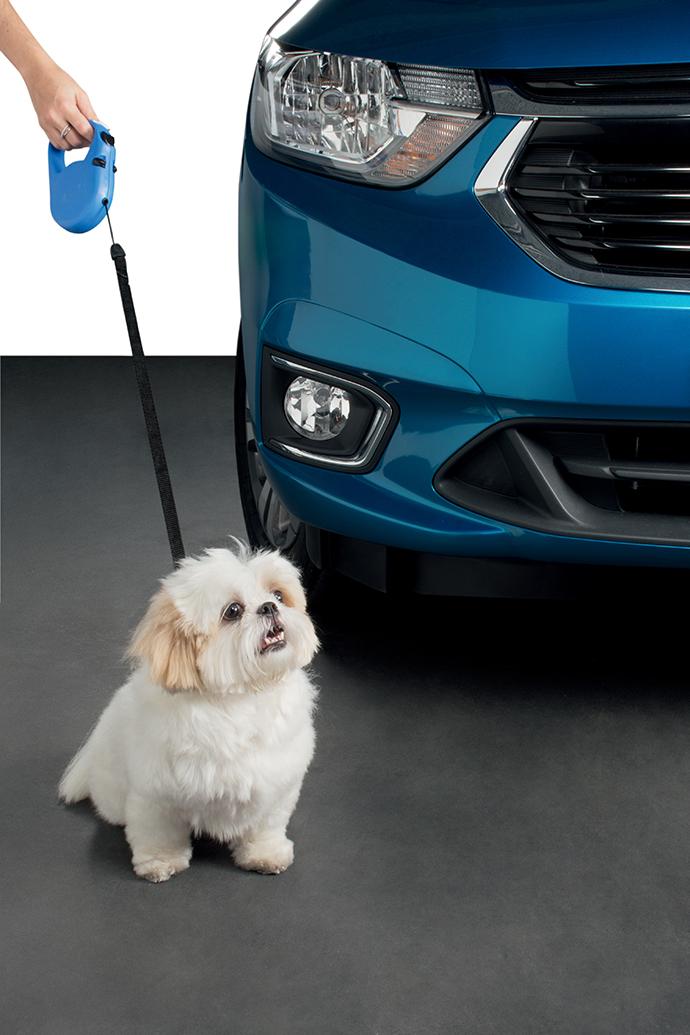 GM Pets