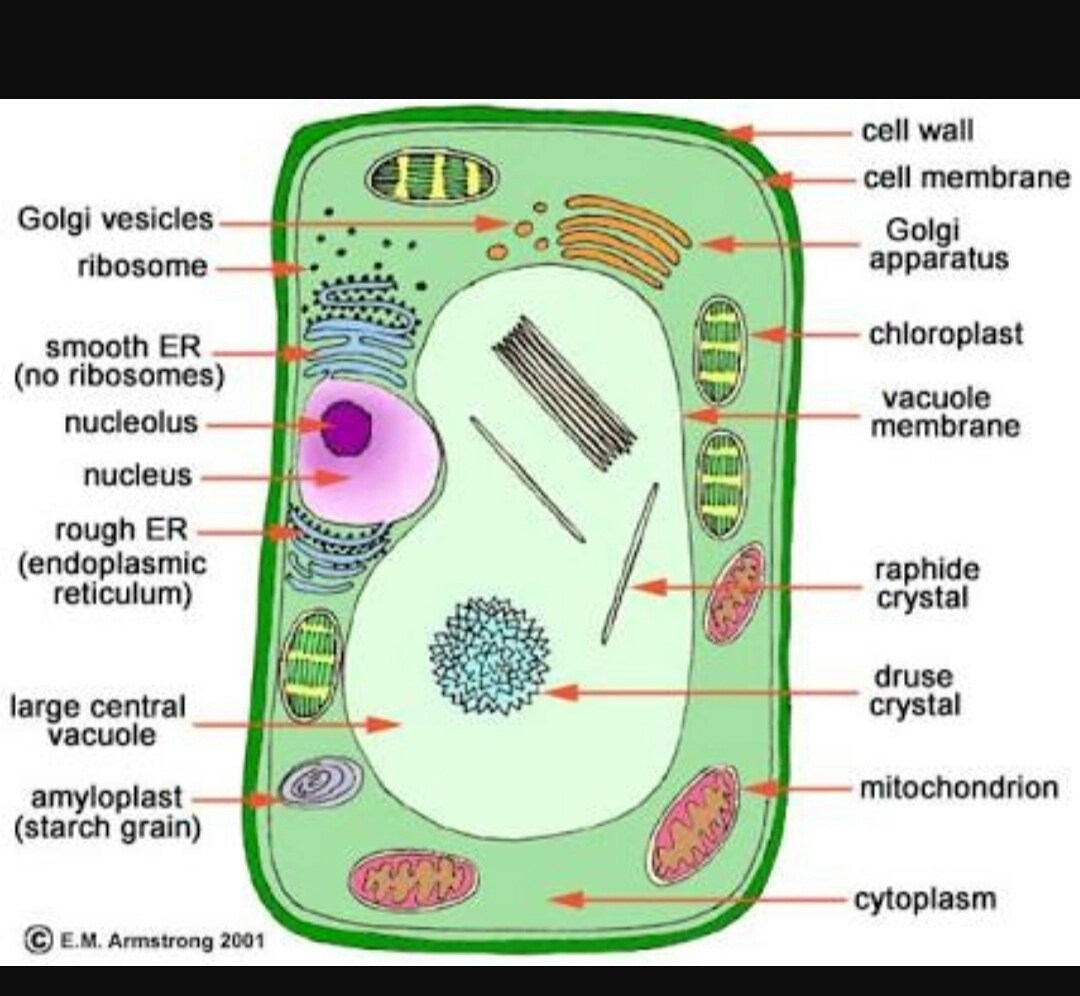 plant cell diagram and labels honeywell thermostat wire label parts of diagramme given in page25 indentify