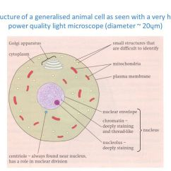A Well Labelled Diagram Of Microscope Rotary Lift Wiring Q14 Draw Large An Animal Cell As Seen Through Download Jpg