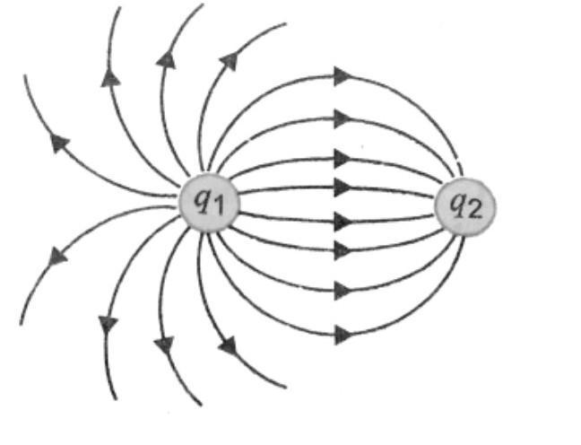The electric field lines of forces between two point