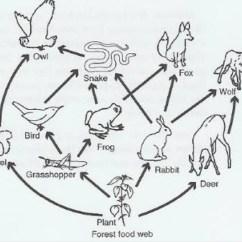 Easy Food Chain Diagram Suzuki Jr 50 Carburetor Draw A Web Of Forest Brainly In