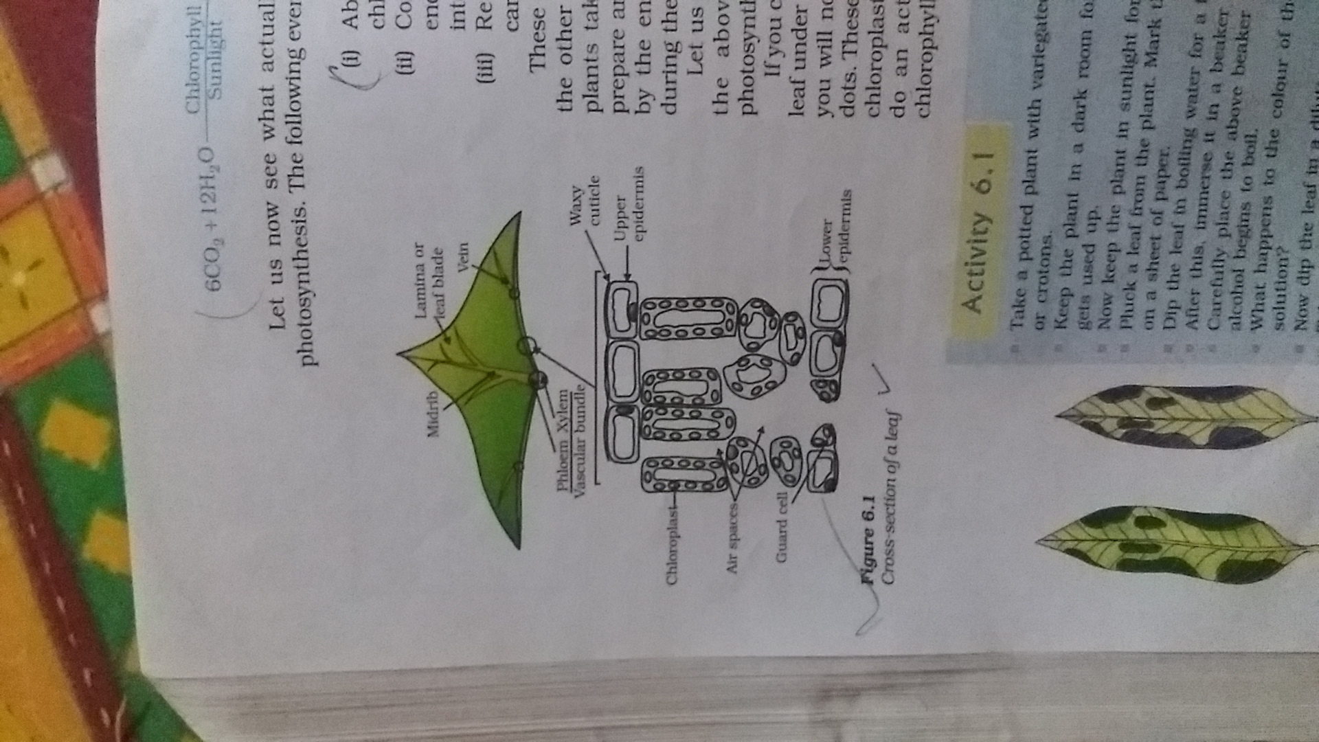 Draw A Diagrm Showing Cross Section Of Leaf And Label On
