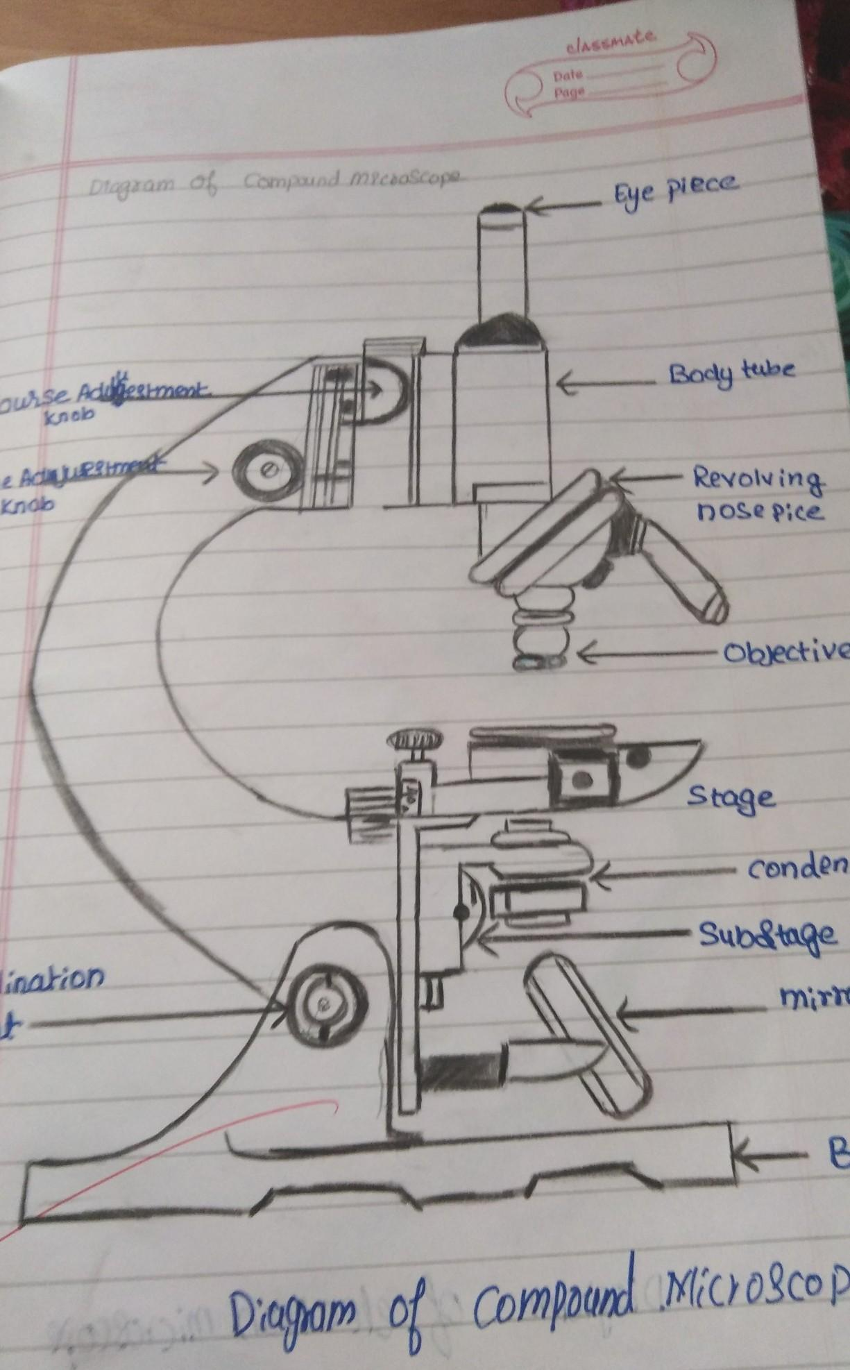 How To Draw The Diagram Of Compound Microscope