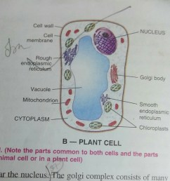 the labelled diagram of the plant cell [ 1080 x 964 Pixel ]