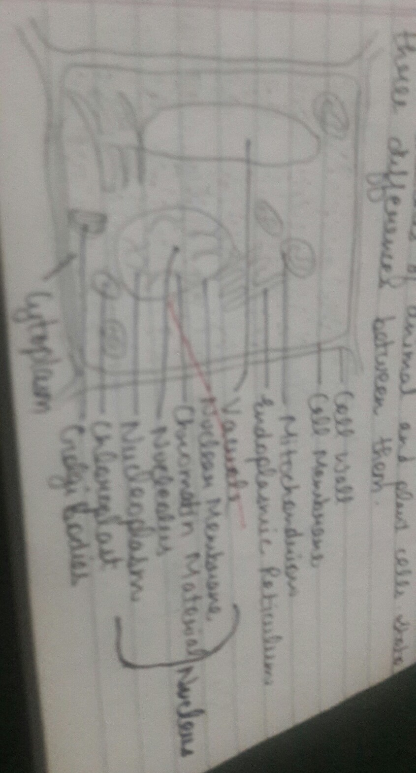 Labeled Diagram Plant Cell Animal Cell 2