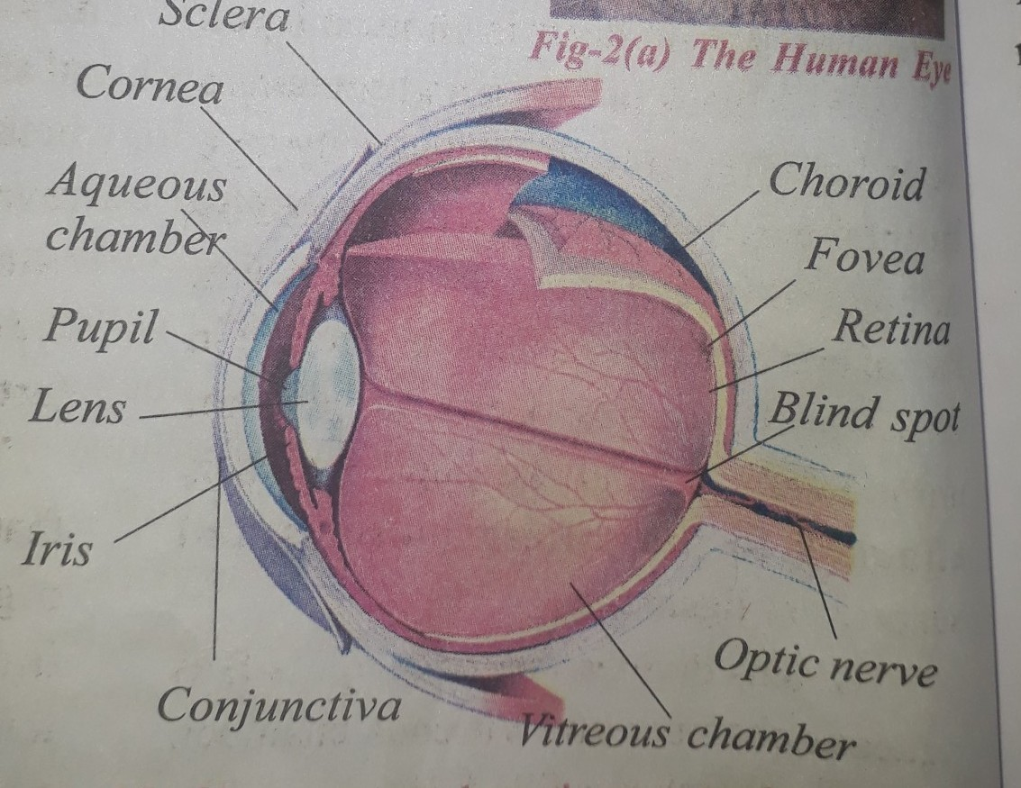 34 Label The Parts Of Eye