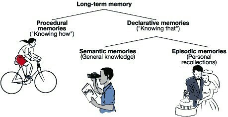 +DIFFERNCE BW declarative and procedural memory