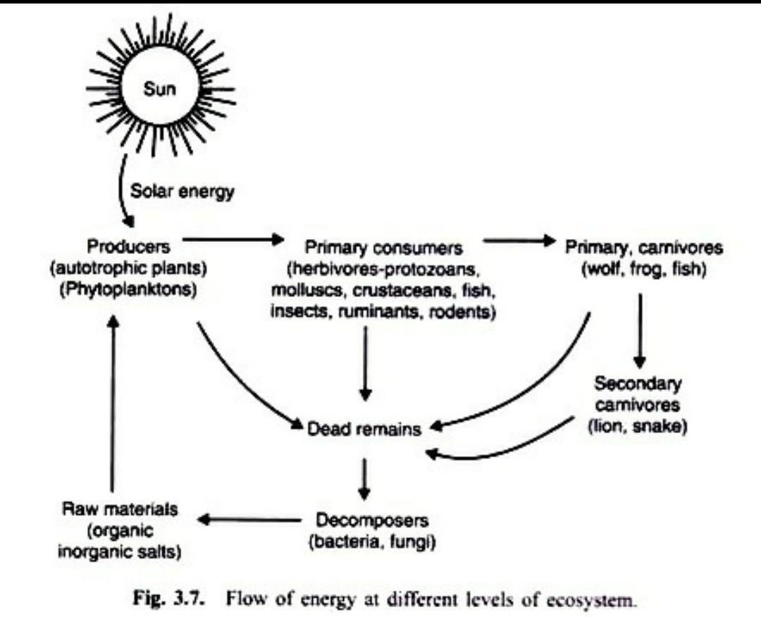 Draw A Line Diagram To Show Flow Of Solar Energy In