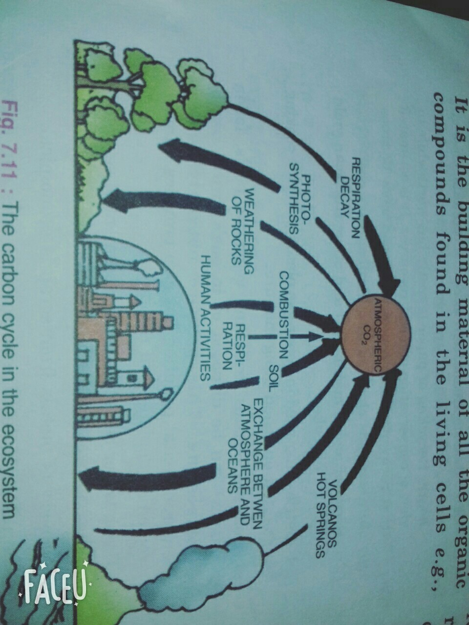 medium resolution of 1 draw a well labelled diagram to show carbon cycle in nature 2what labelled diagram of acid rain