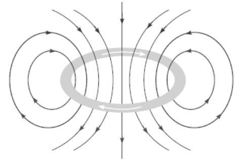 Draw the magnetic field lines through and around a single