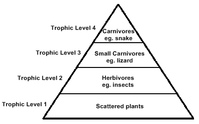 draw a diagram to show various tropic levels upto fourth