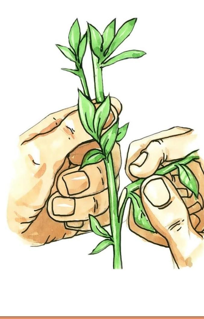vegitative part involved in vegetative propagation ...