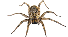 spider removal and bug exterminator services in michigan