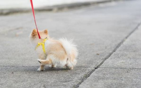 how long can dogs hold their pee