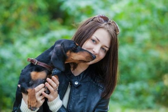 Dachshund Loyal Dog Breeds