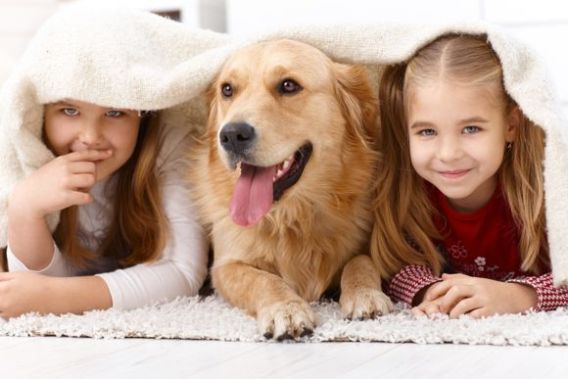 Golden Retrievers Loyal Dog Breeds