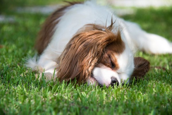 Best Seed Grass For Dogs