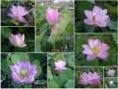 分享花香之美