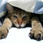 猫が爪切りを嫌がる場合におすすめの方法!簡単に切れるやり方を紹介!