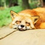 狐につままれたようの意味はこれでした。有吉さんの真意!?