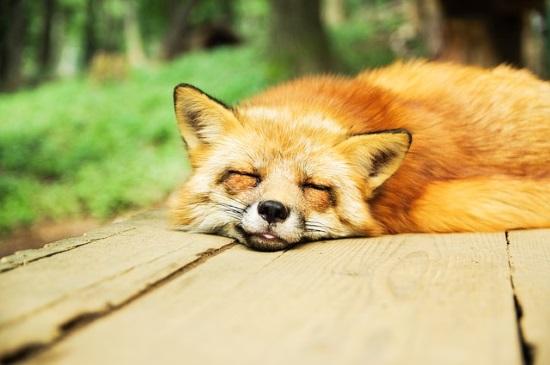 狐につままれる意味