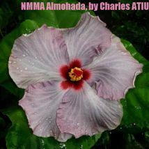 NMMA Almohada