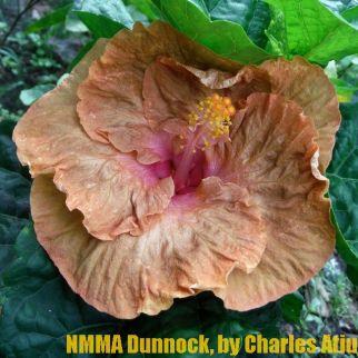 NMMA Dunnock