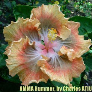 NMMA Hummer