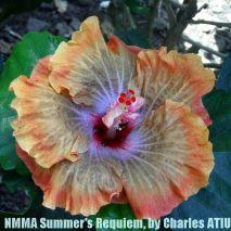 NMMA Summer's Requiem