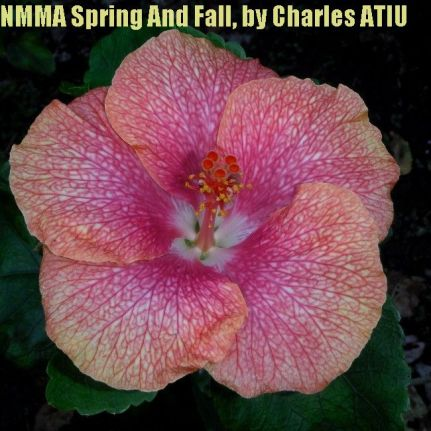 12 NMMA Spring And Fall