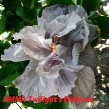 30 NMMA Twilight's Embrace