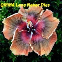 9 QMMA Love Never Dies