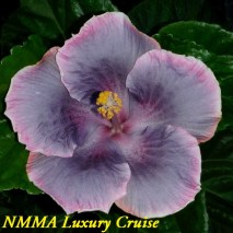 41 NMMA Luxury Cruise