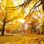 代々木公園の紅葉デートの楽しみ方!時期の確認や混雑や雰囲気について