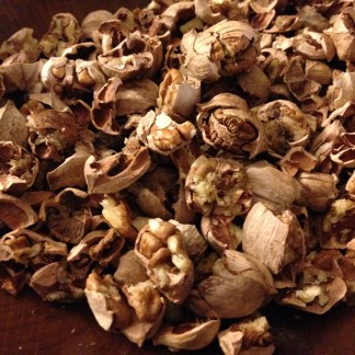 pile of cracked hickory nuts