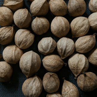 Sweet Pignut Hickory Nuts
