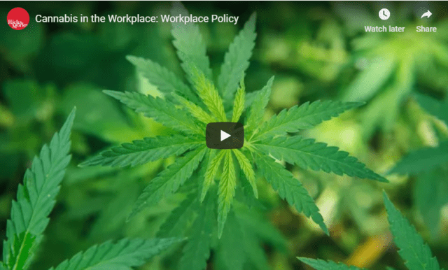cannabis workplace policy