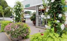 Hicks Nurseries History Of