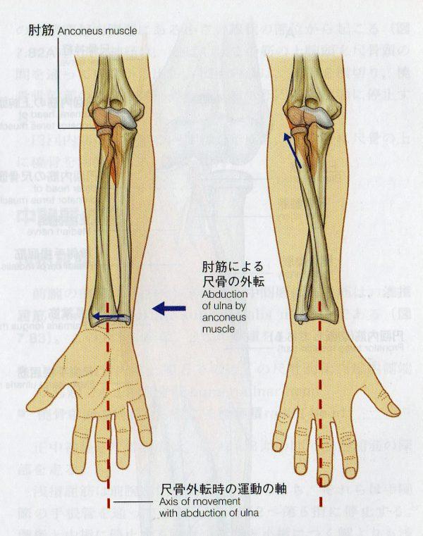 骨を一つひとつ獨立させると細かいコントロールが効く | 米沢市のひだまり整體院 整體日誌