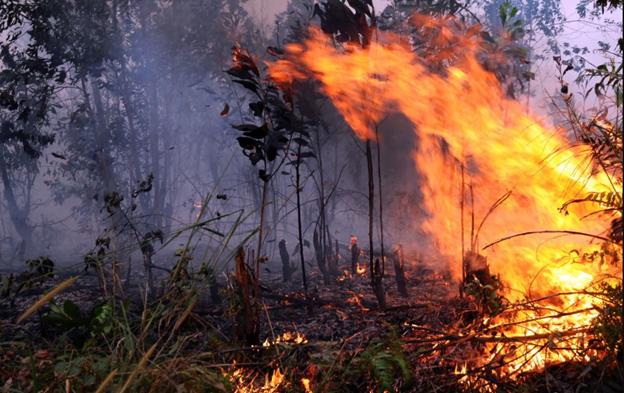 Hukum Bakar Hutan Dan Lahan Dalam Pandangan Islam